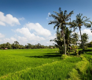 The Landscape of Myth - A Journey into the Heart of Bali through Yoga & Culture